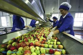 Работа на фруктовой фабрике
